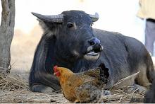 """""""科普进农家,助农帮帮团""""直播活动,9月15日,专家支招科学种植-广新农发"""